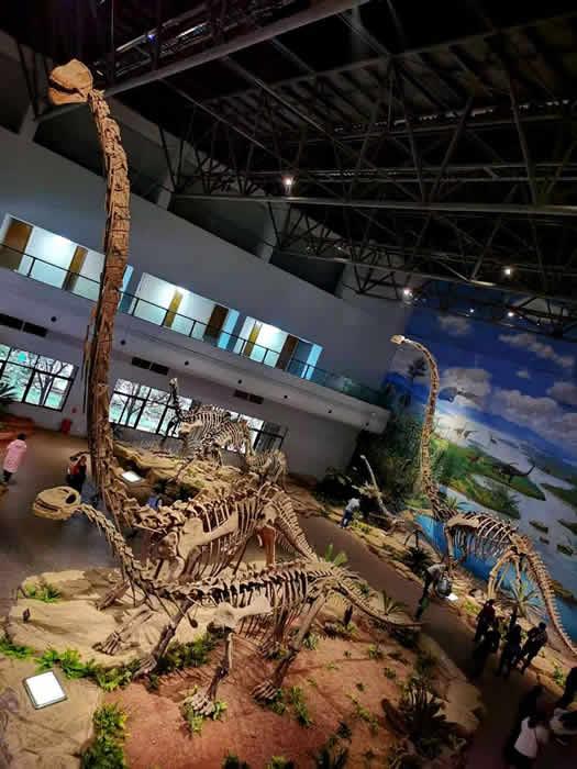 恐龙骨架(我可是站到二楼才照到全貌的)